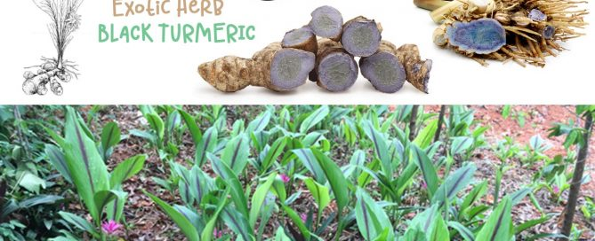 black-turmeric-uses