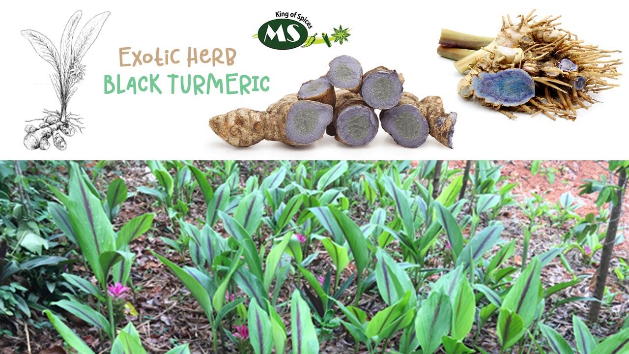 black-turmeric-uses